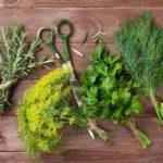 Весенние травы – ценные источники питания